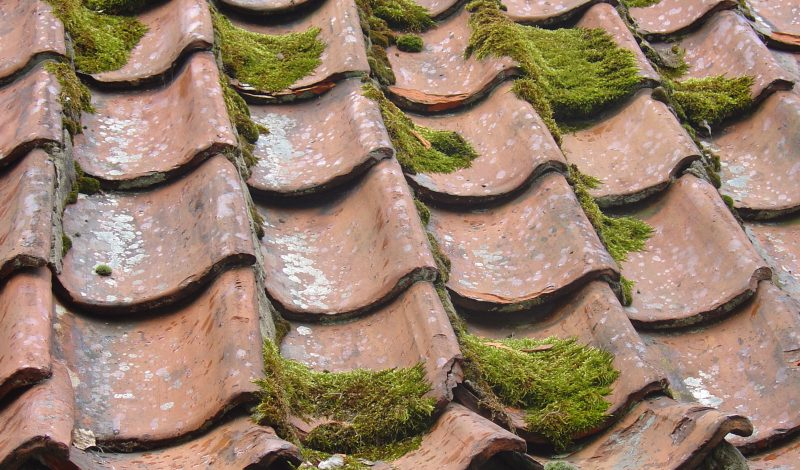 Learn the Fantastic Ways Through Which You Can Remove Algae From Your Roof