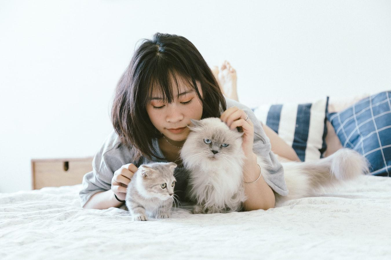 Pets and CBD : The Relationship Between The Two